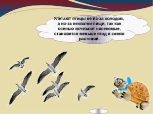 Улетают птицы не из-за холодов, а из-за нехватки пищи, так как осенью исчезаю