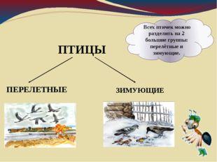 Всех птичек можно разделить на 2 большие группы: перелётные и зимующие. ПТИЦ