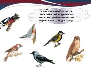 Давайте познакомимся с птицами, которые осенью никуда не улетают, зимуют в на