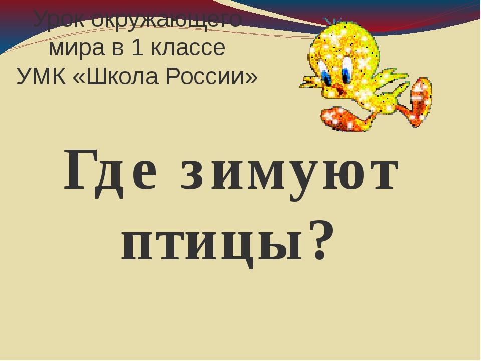 Урок окружающего мира в 1 классе УМК «Школа России» Где зимуют птицы?