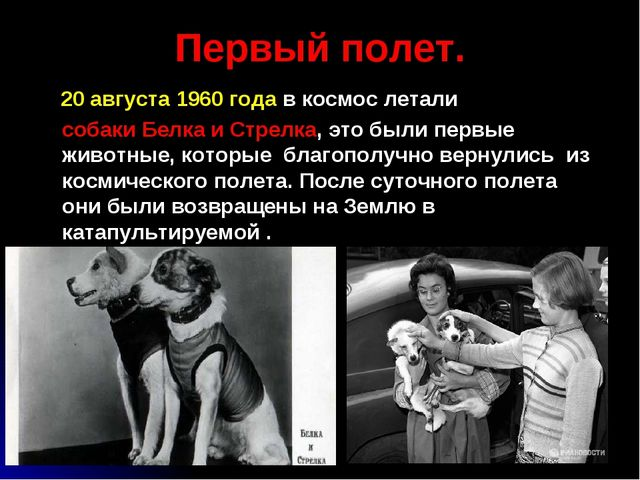 Первый полет. 20 августа 1960 года в космос летали собаки Белка и Стрелка, эт...