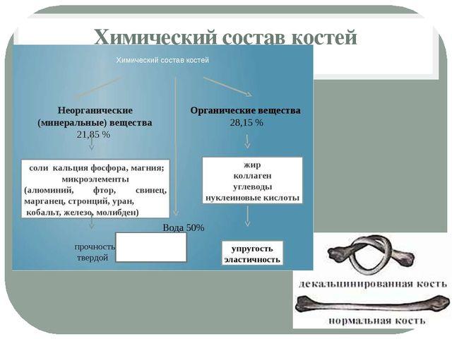 Химический состав костей прочность твердость