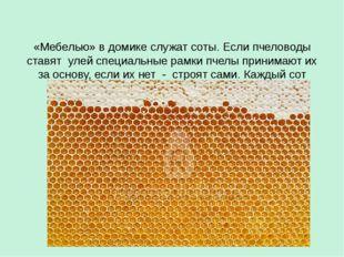 «Мебелью» в домике служат соты. Если пчеловоды ставят улей специальные рамки