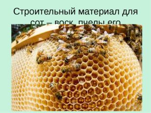 Строительный материал для сот – воск, пчелы его выделяют сами.