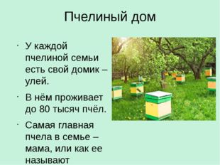 Пчелиный дом У каждой пчелиной семьи есть свой домик – улей. В нём проживает