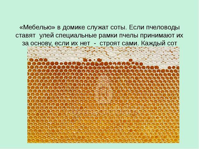 «Мебелью» в домике служат соты. Если пчеловоды ставят улей специальные рамки...