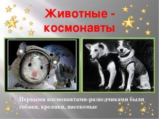 Животные - космонавты Первыми космонавтами-разведчиками были собаки, кролики,
