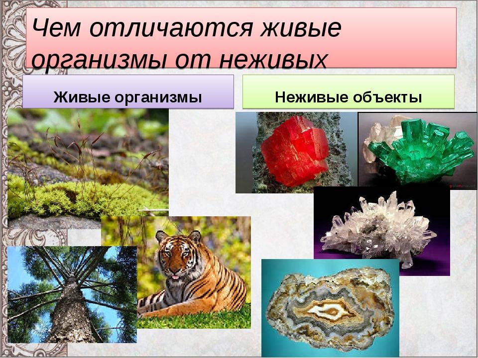 Чем отличаются живые организмы от неживых объектов? Живые организмы Неживые о...