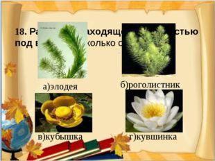 18. Растение, находящееся полностью под водой (несколько ответов)  а)элодея