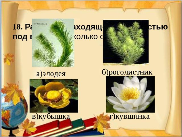18. Растение, находящееся полностью под водой (несколько ответов)  а)элодея...