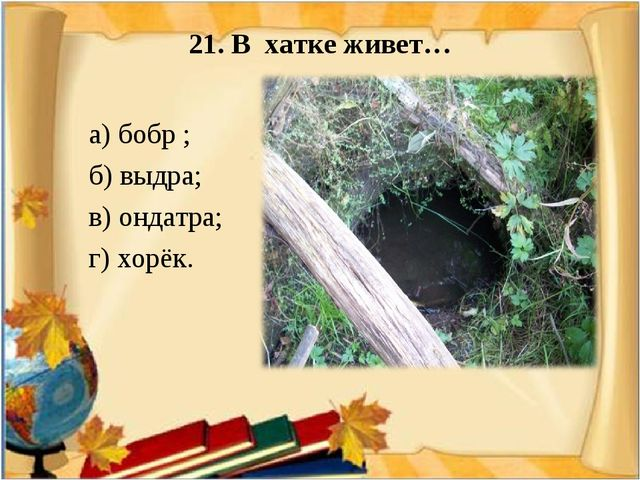 21. В хатке живет…  а) бобр ; б) выдра; в) ондатра; г) хорёк.