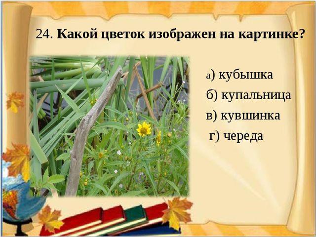 24. Какой цветок изображен на картинке? а) кубышка б) купальница в) кувшинка...