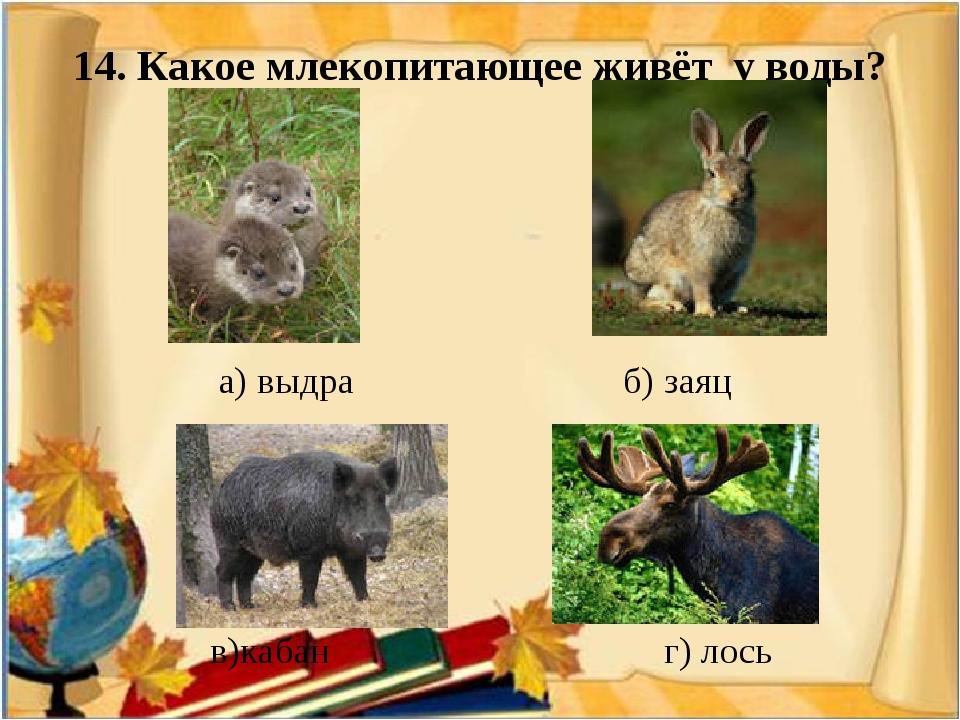 14. Какое млекопитающее живёт у воды? а) выдра б) заяц в)кабан г) лось