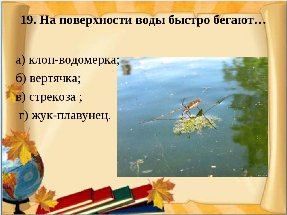 19. На поверхности воды быстро бегают…  а) клоп-водомерка; б) вертячка; в)...