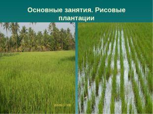 Основные занятия. Рисовые плантации