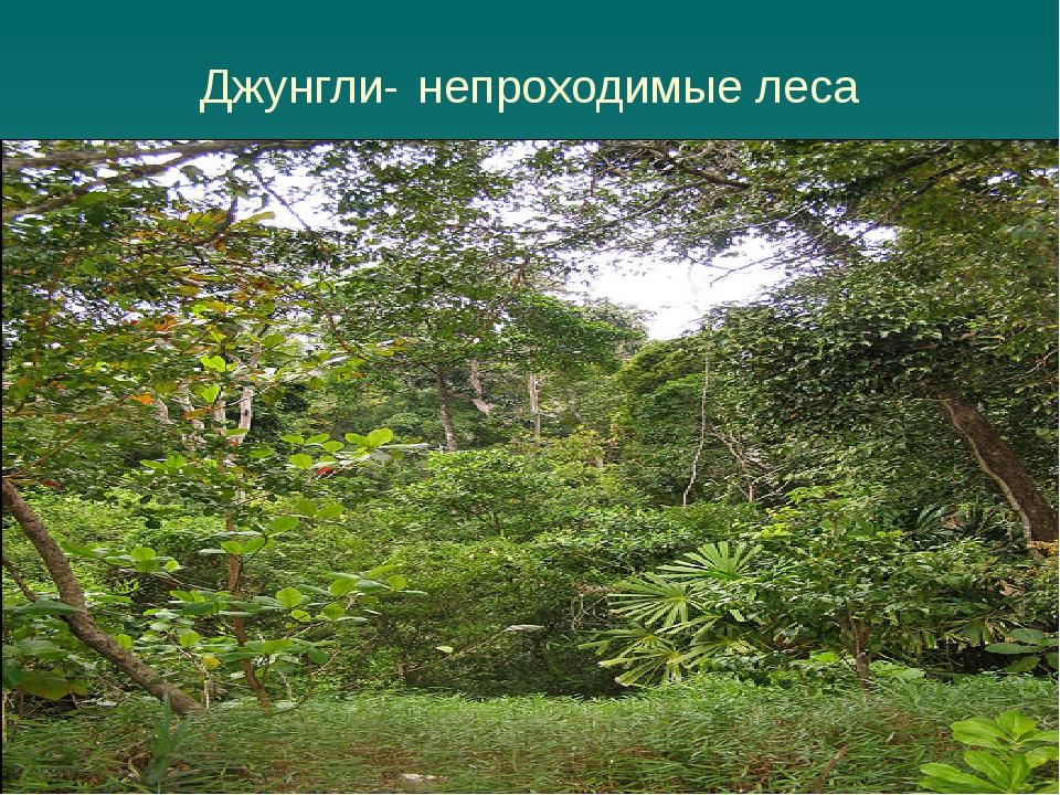 Джунгли- непроходимые леса