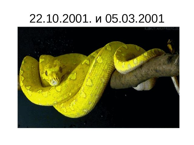 22.10.2001. и 05.03.2001