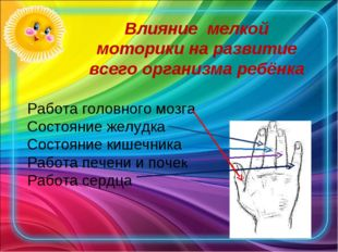Работа головного мозга Состояние желудка Состояние кишечника Работа печени и