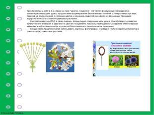 """Урок биологии и ИЗО в 6-м классе на тему """"Цветок. Соцветия""""на уроке формул"""