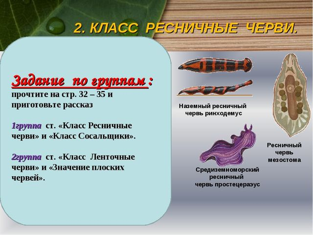 2. КЛАСС РЕСНИЧНЫЕ ЧЕРВИ. Большинство свободноживущих плоских червей — это ре...