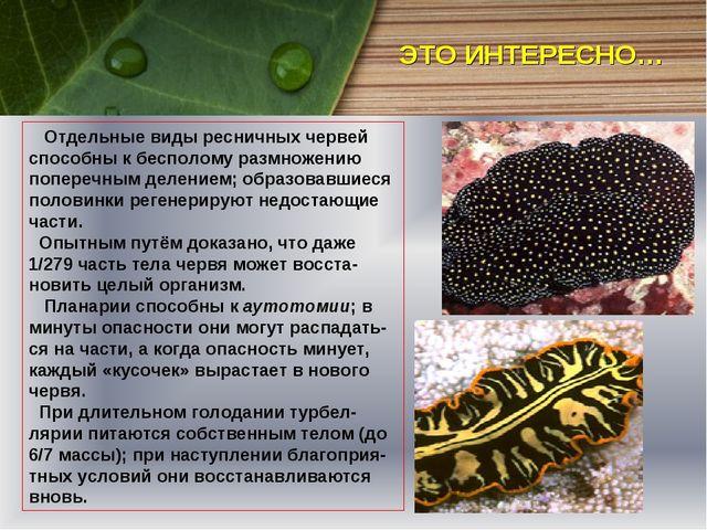 Отдельные виды ресничных червей способны к бесполому размножению поперечным...
