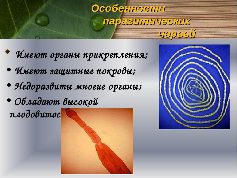 Особенности паразитических червей Имеют органы прикрепления; Имеют защитные п...