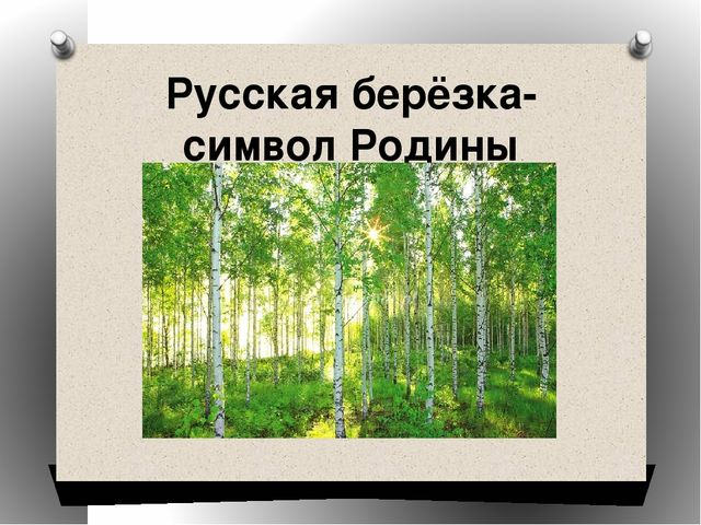Русская берёзка- символ Родины