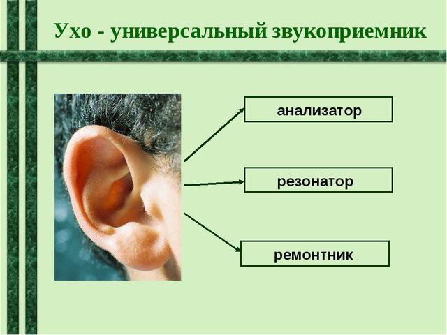 Ухо - универсальный звукоприемник анализатор резонатор ремонтник