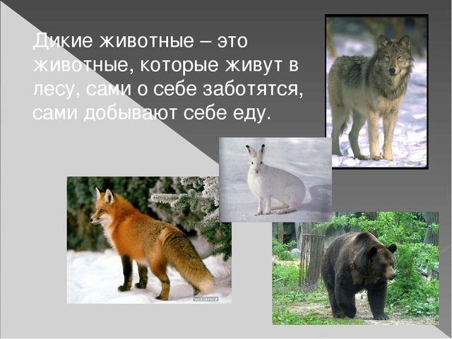 Дикие животные – это животные, которые живут в лесу, сами о себе заботятся, с...