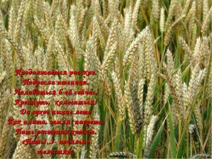 Продолжается рассказ. Подросла пшеница. Наливаться б ей сейчас, Крепнуть, кол