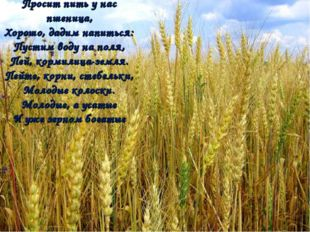 Просит пить у нас пшеница, Хорошо, дадим напиться: Пустим воду на поля, Пей,