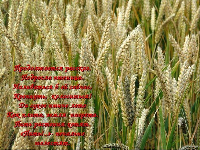 Продолжается рассказ. Подросла пшеница. Наливаться б ей сейчас, Крепнуть, кол...