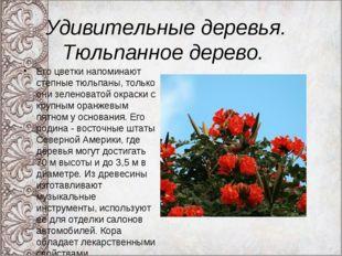 Удивительные деревья. Тюльпанное дерево. Его цветки напоминают степные тюльпа
