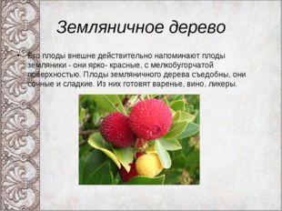 Земляничное дерево Его плоды внешне действительно напоминают плоды земляники