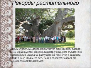 Рекорды растительного мира. Самым «толстым» деревом считается африканский бао