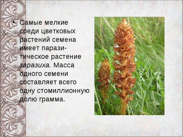 Самые мелкие среди цветковых растений семена имеет парази- тическое растение...