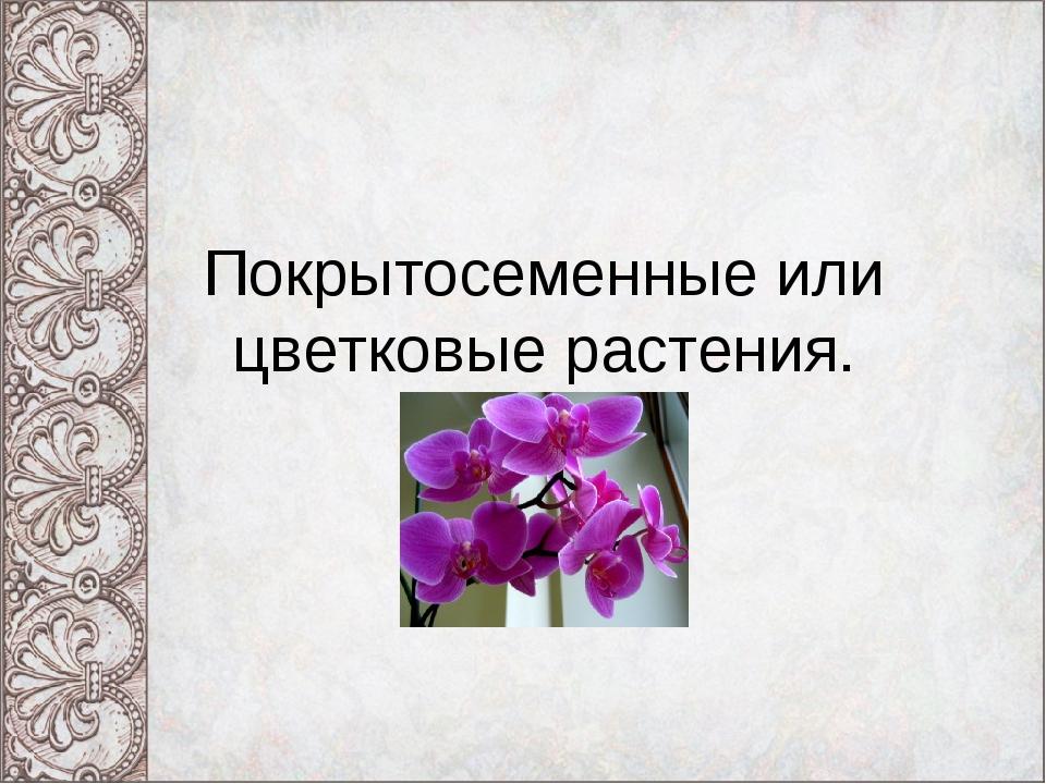 Покрытосеменные или цветковые растения.