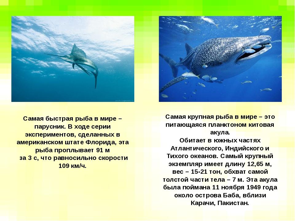 Самая быстрая рыба в мире – парусник. В ходе серии экспериментов, сделанных в...