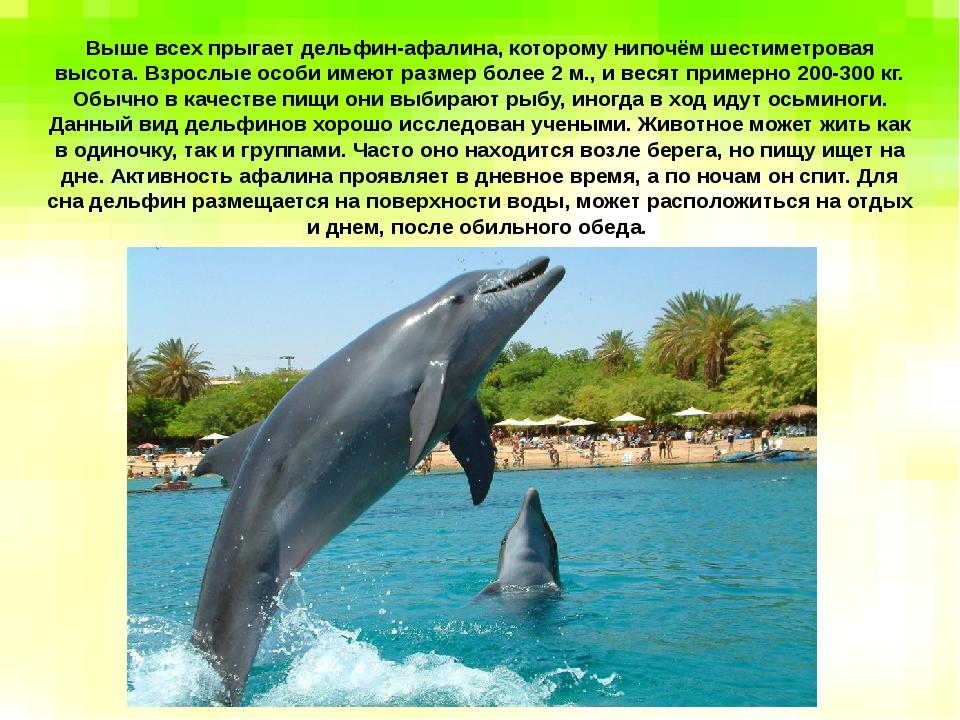 Выше всех прыгает дельфин-афалина, которому нипочём шестиметровая высота. Вз...