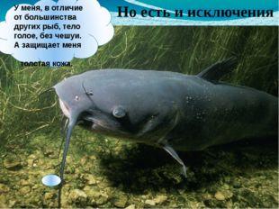 Уменя, вотличие отбольшинства других рыб, тело голое, без чешуи. А защища