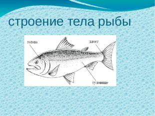 строение тела рыбы