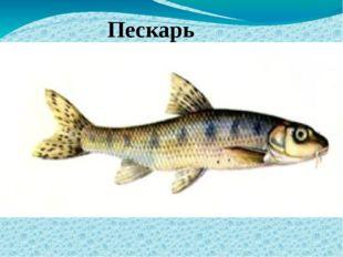 Пескарь