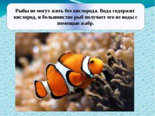 Рыбы не могут жить без кислорода. Вода содержит кислород, и большинство рыб
