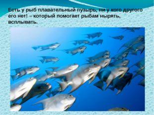 Есть у рыб плавательный пузырь, ни у кого другого его нет! – который помогает
