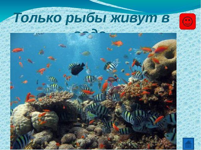 Только рыбы живут в воде.