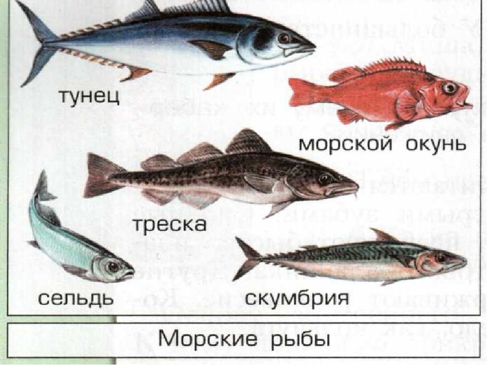 морская рыба фото и названия