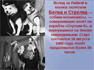 Вслед за Лайкой в космос полетели Белка и Стрелка —собаки-космонавты, —соверш