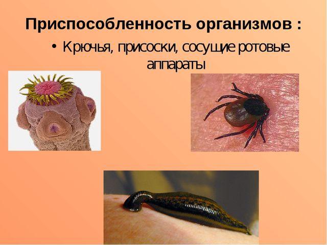Приспособленность организмов : Крючья, присоски, сосущие ротовые аппараты