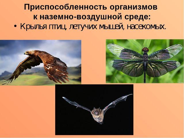Приспособленность организмов к наземно-воздушной среде: Крылья птиц, летучих...