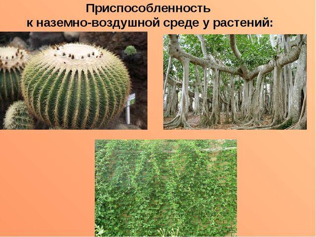 Приспособленность к наземно-воздушной среде у растений: